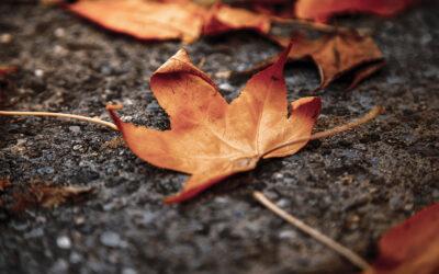 Riflessologia Plantare Elemento Terra: Caratteristiche ed Emozioni